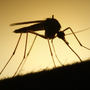 Department of Public Health tracks down another virus carried by mosquitoes