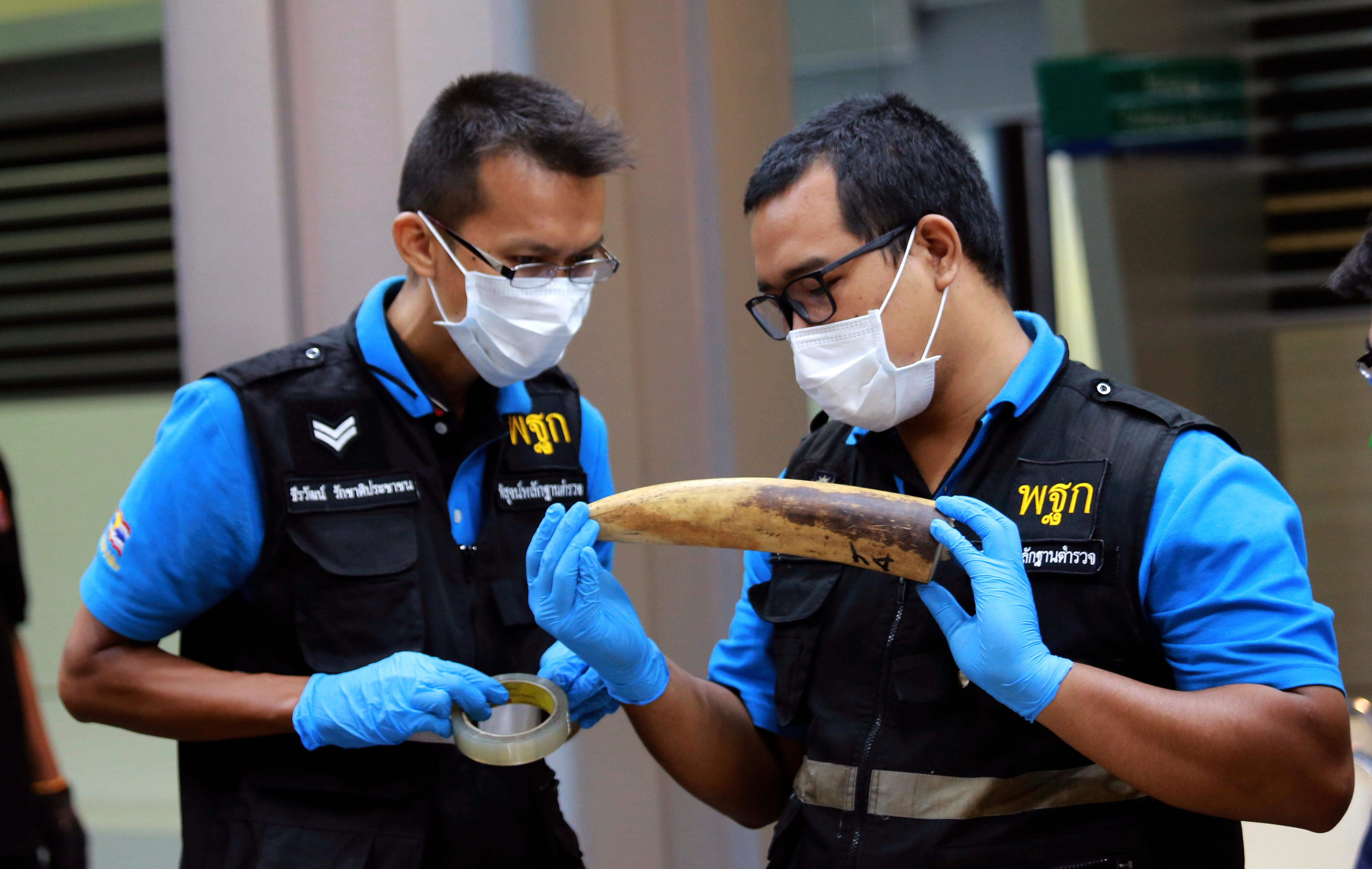 Forensic officers inspect ivory seized at the customs office after a press conference in Bangkok, Thailand, Friday, Jan. 12, 2018. Thai authorities seized 148 kilograms full elephant tusk and 31 tusk fragments originating from Nigeria destined for China†worth over 15 million baht ($469,800). (AP Photo/Sakchai Lalit)