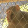 """Celebrity"" airport monkey adjusting to life at primate sanctuary"