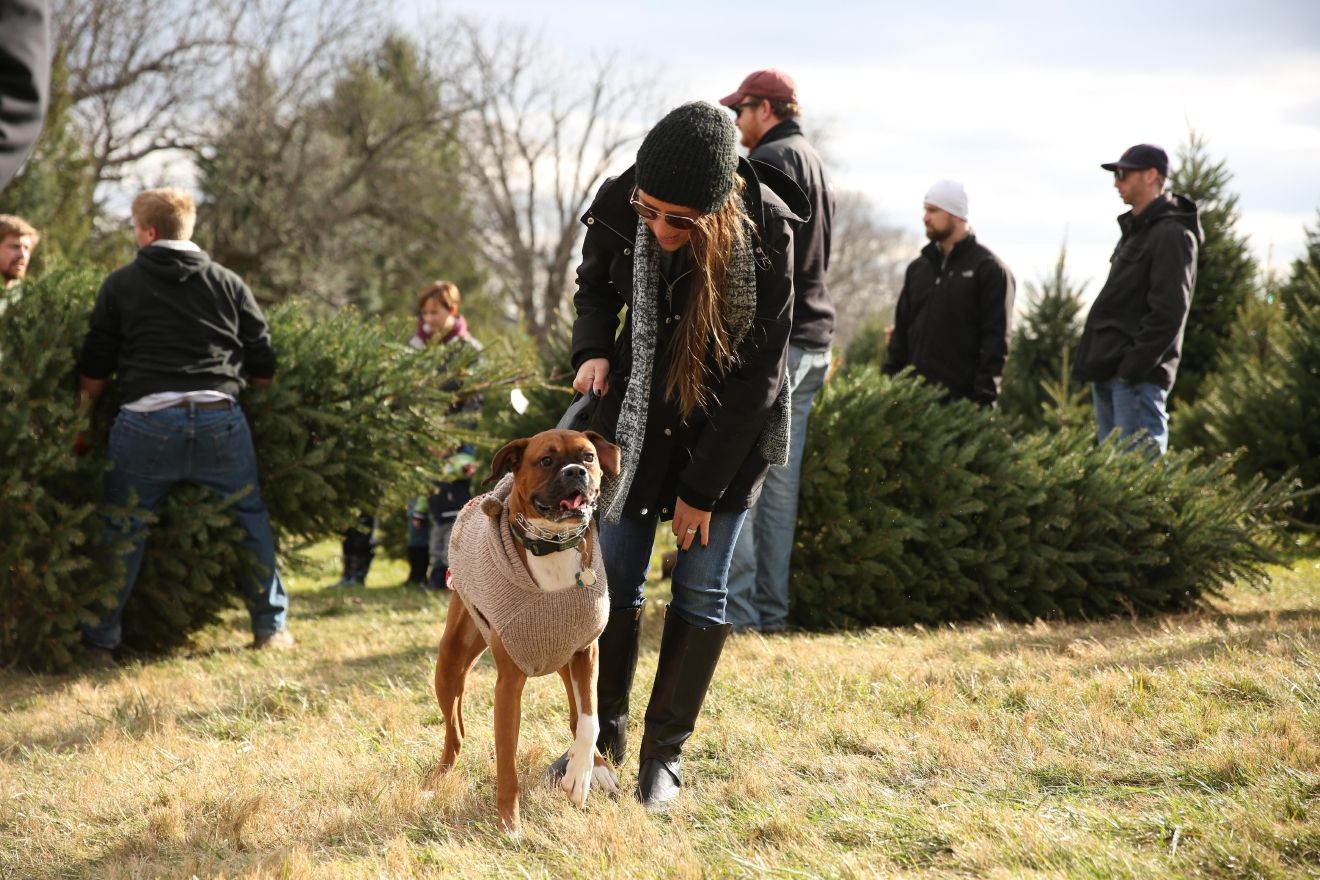 Snickers Gap Christmas Tree Farm is fun for the whole family, including your four-legged friends. (Amanda Andrade-Rhoades/DC Refined)