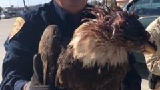 Reward offered for arrest of shooter of Bald Eagle in Anahuac