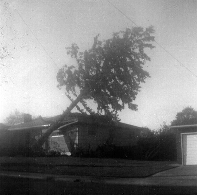 Columbus Day Windstorm Damage