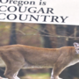 Police: Cougar attacks small dog in southeast Portland