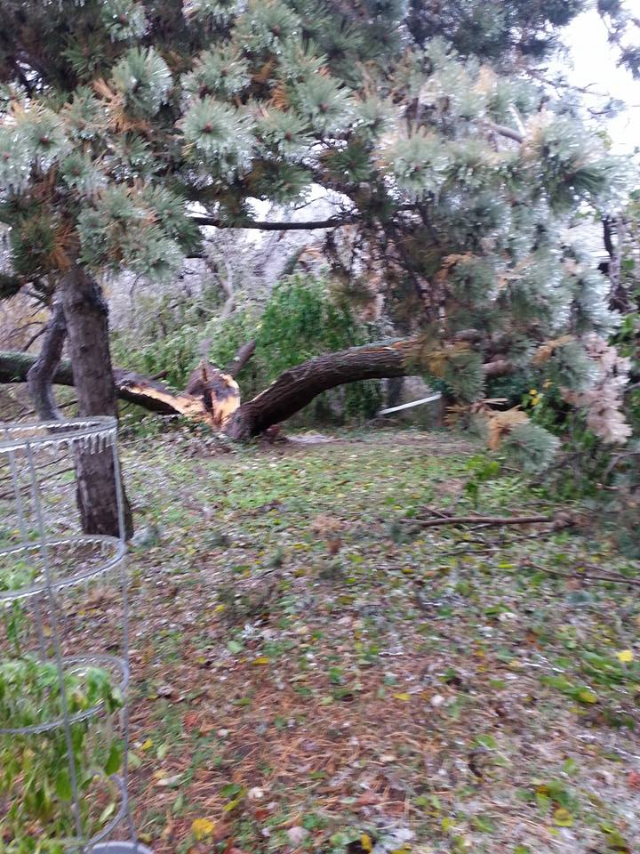 This tree fell in front of our house. It's split in thirds. Northwest OKC. from Shelly Burge