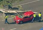 dn26 Air4 Fife Tree on Freeway_frame_93025.jpg