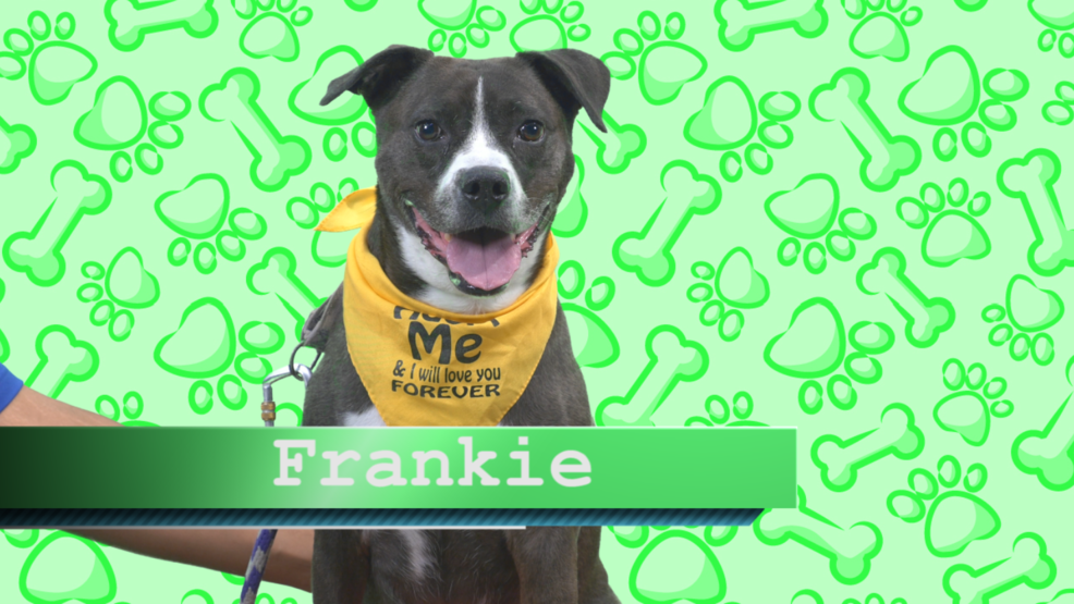 Frankie Creature.PNG