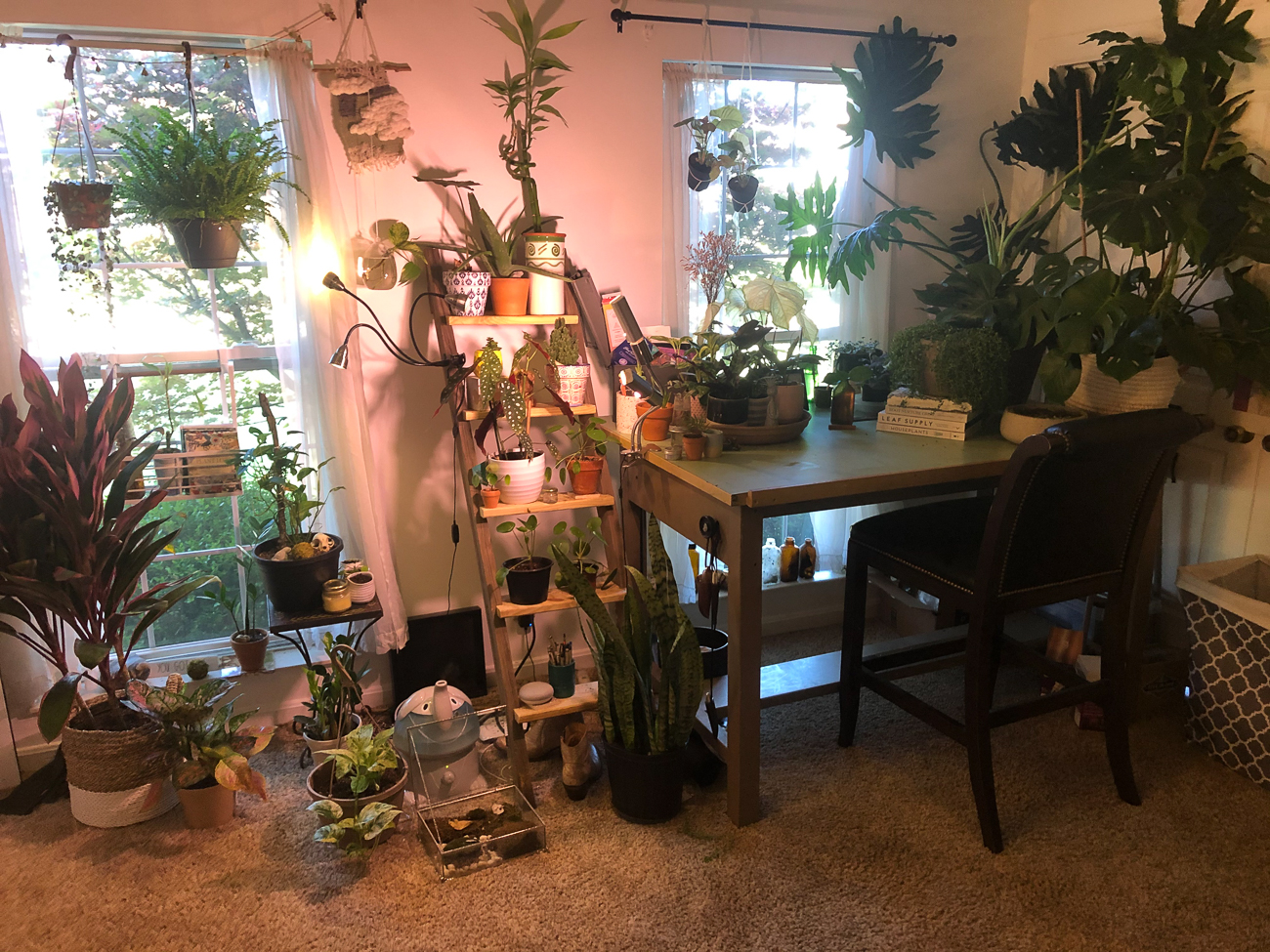 "Emma Wainscott (IG: @wainss) from Crestview Hills / ""As an interior designer, I have always loved the incorporation of greenery and life into spaces. In my own personal space, I like to feel transported to a new place when I enter. Plants bring me such a sense of peace and calmness and I have found they're really effective in reducing stress levels after a long day. I've been collecting plants for a few years, but have been gardening with my dad since I was a little girl. The first houseplant I ever purchased was a heart leaf philodendron and I haven't stopped since!"" / Image courtesy of Emma Wainscott // Published: 6.13.20"