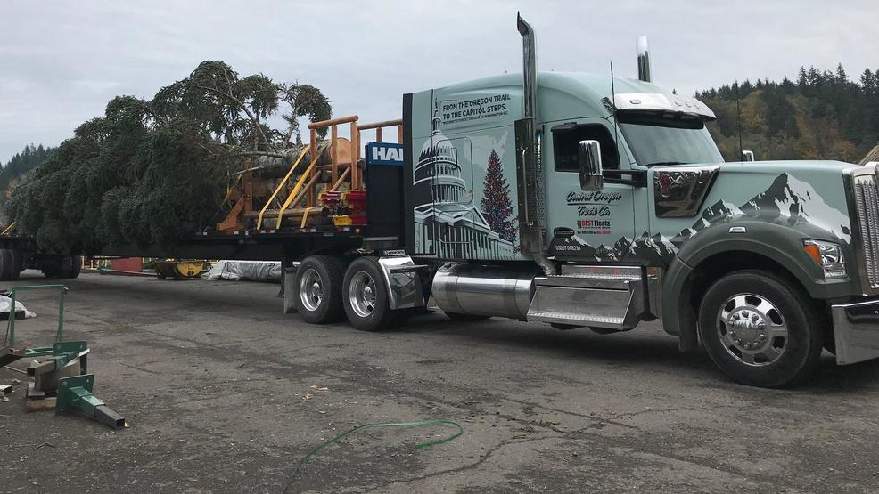 the us capitol christmas tree selected from the willamette national forest begins its cross country journey to our nations capital this friday in sweet - How Many Christmas Trees Per Acre