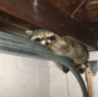 Stray animal in elderly woman's basement highlights bigger issue