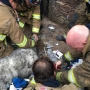 Dog succumbs to injures after firefighters rescue him from large house fire