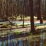 Photo of the Day: Rainbow Swamp in Ravenel