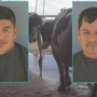 Judge sentences McArthur Dairy farm workers in animal cruelty investigation