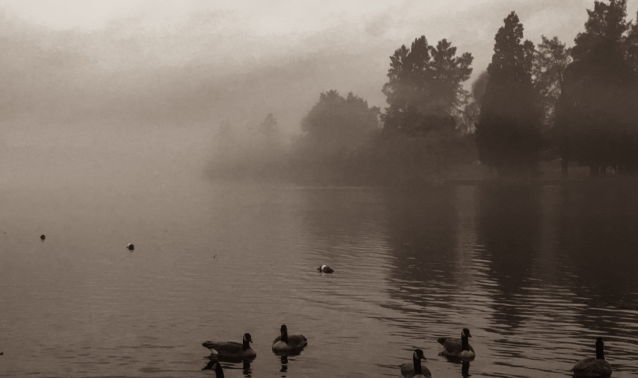 Fog on Seattle's Green Lake (Photo: Dustin Guy)<p></p>