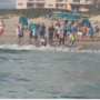 Evidence of possible shark abuse caught on video
