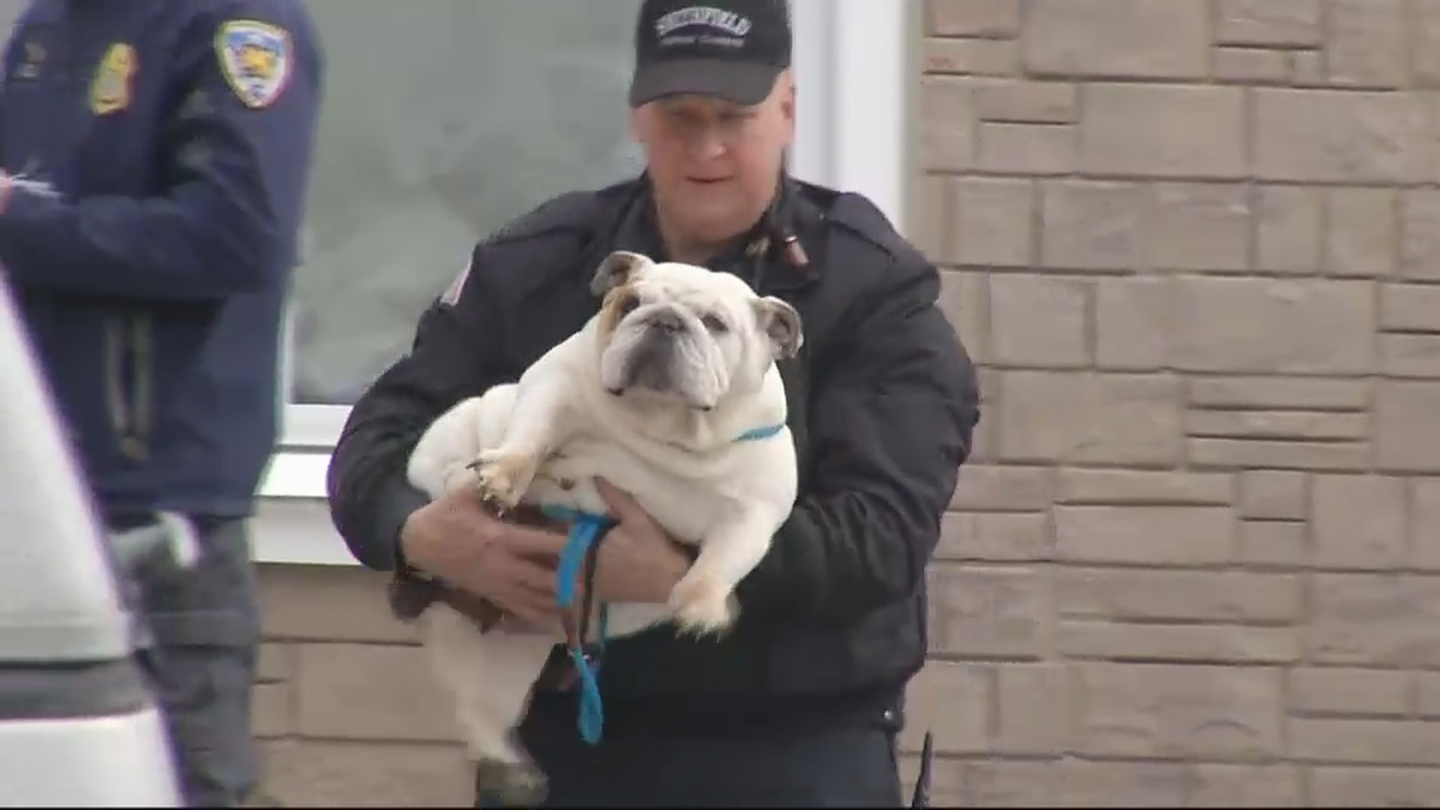 Officers from Smithfield Animal Control and other towns removed 25 to 30 dogs from a home on Pleasant View Avenue, Tuesday, March 20, 2018. (WJAR)