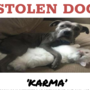 Reward offered for stolen Chico pit bull