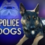 Injured police dogs in Champaign to get ambulance rides