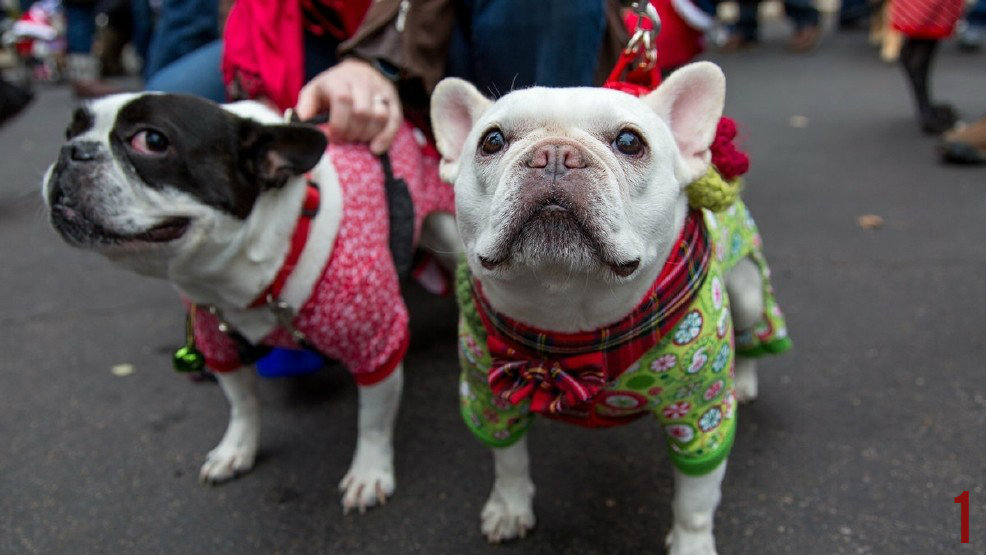 #1 - The Reindog Parade takes place on Saturday, Dec. 10, beginning at 12pm in Mt. Adams. / Image: Daniel Smyth