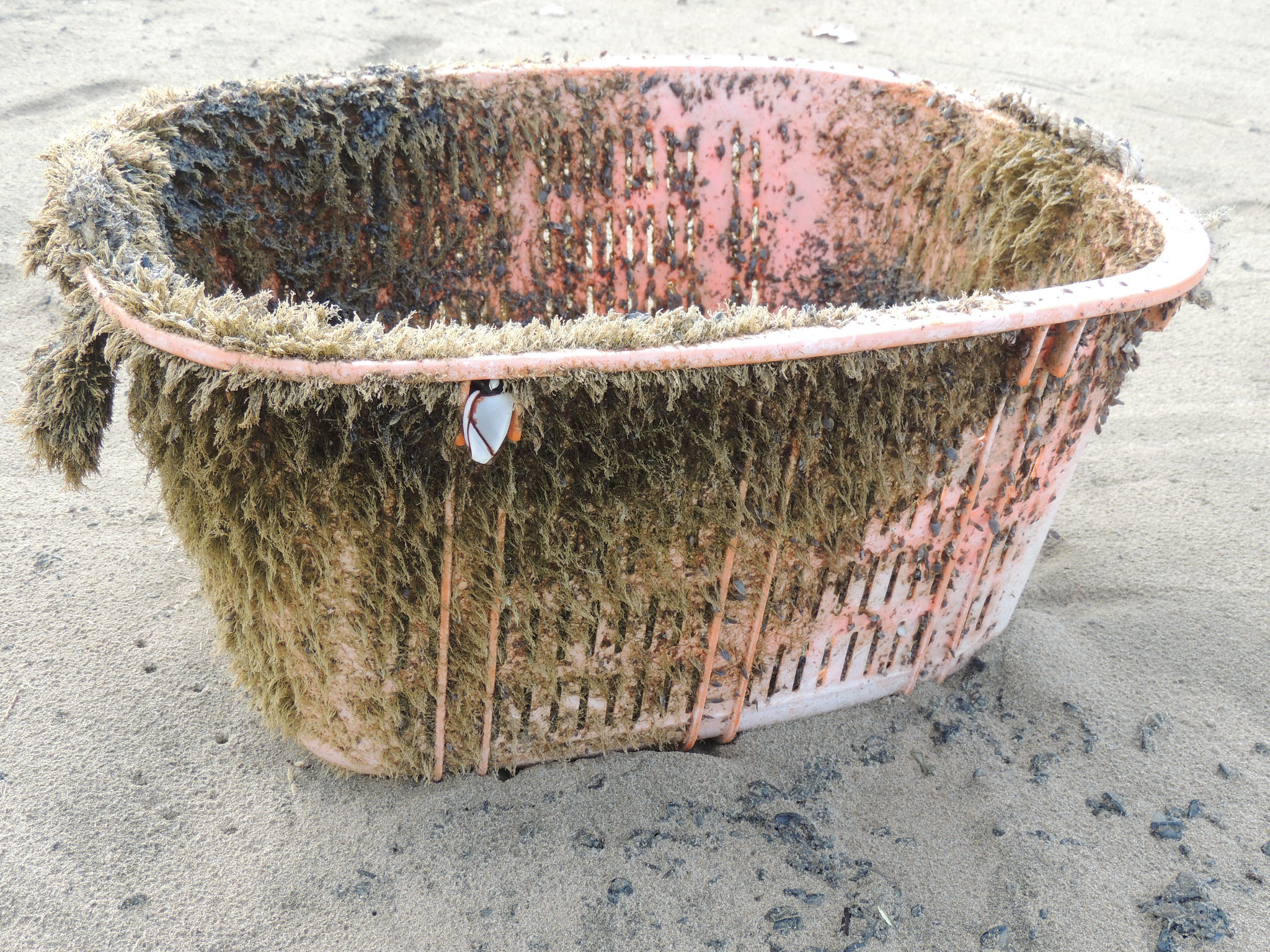 Plastic tub from the 2011 Japanese earthquake and tsunami that were found by Oregon State University researchers along the coast of Oregon. (OSU)
