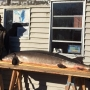 DNR: 17 sturgeon speared Sunday on Lake Winnebago system