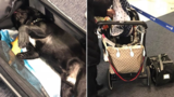 Dog dies after United Airlines worker has it placed in overhead bin