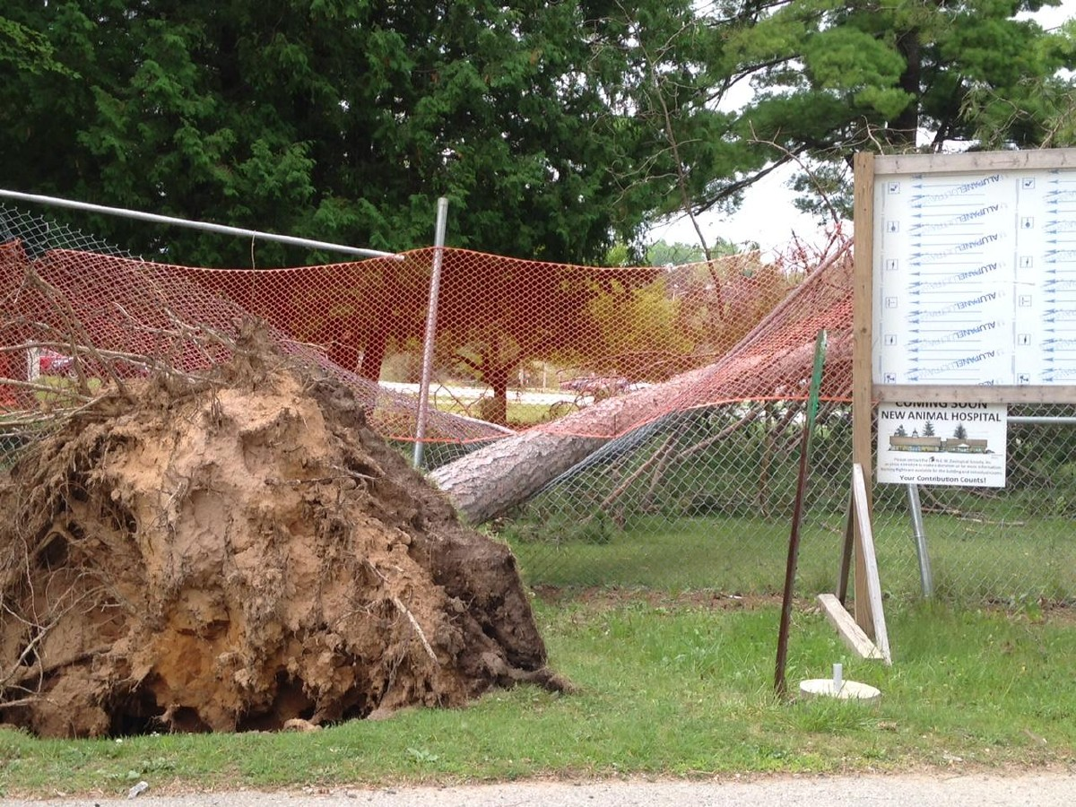 An uprooted tree is seen at the NEW Zoo in Suamico Aug. 17, 2015, three days after storms caused an estimated $20,000 in damage to the zoo. (WLUK/Phil DeCastro)