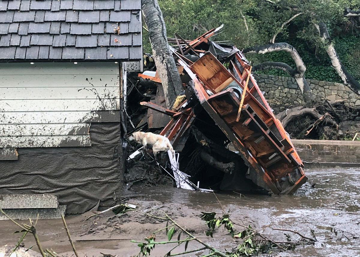 In this photo provided by Santa Barbara County Fire Department, Santa Barbara County Fire Search Dog Reilly looks for victims in damaged and destroyed homes in Montecito, Calif. following deadly runoff of mud and debris from heavy rain on Tuesday, Jan. 9, 2018. At least five people were killed and homes were swept from their foundations Tuesday as heavy rain sent mud and boulders sliding down hills stripped of vegetation by a gigantic wildfire that raged in Southern California last month. (Mike Eliason/Santa Barbara County Fire Department via AP)