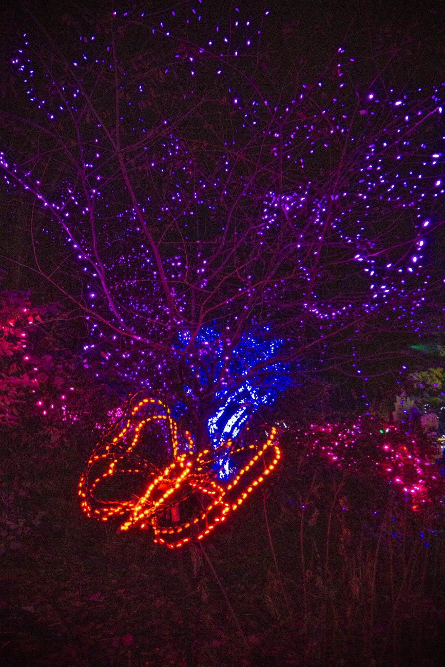 The Cincinnati Zoo kicked off their PNC Festival of Lights with a special preview of the traditional light show for zoo members on Friday, November 15. The sneak peek included the lighting of the tree, a ballet performance by Fiona with the Cincinnati Ballet, and visits from Santa and other holiday friends throughout the park. / Image: Katie Robinson, Cincinnati Refined // Published: 11.16.19