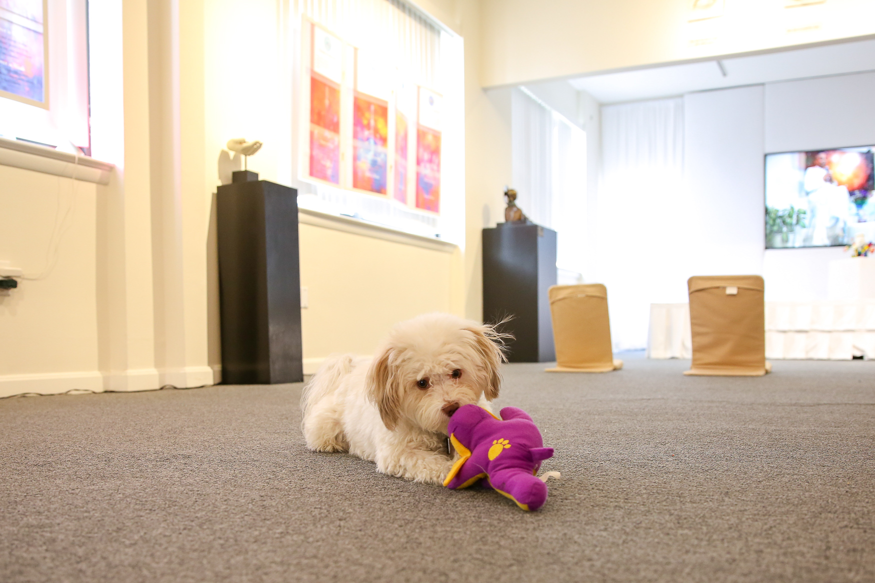 Happi is the museum's resident pooch.{ }(Amanda Andrade-Rhoades/DC Refined)