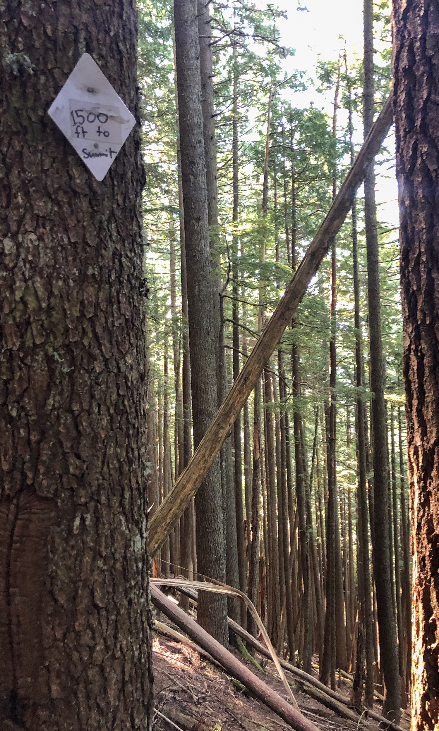 "<p>Take in a handful of trail mix beside this tree marked ""1500 ft to Summit,"" which translates to elevation remaining. (Image:{&nbsp;}Rachael A. Jones / Seattle Refined){&nbsp;}</p>"