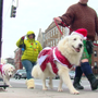 OTR Kennel Club hosts Fifth Annual Rail Dog Parade