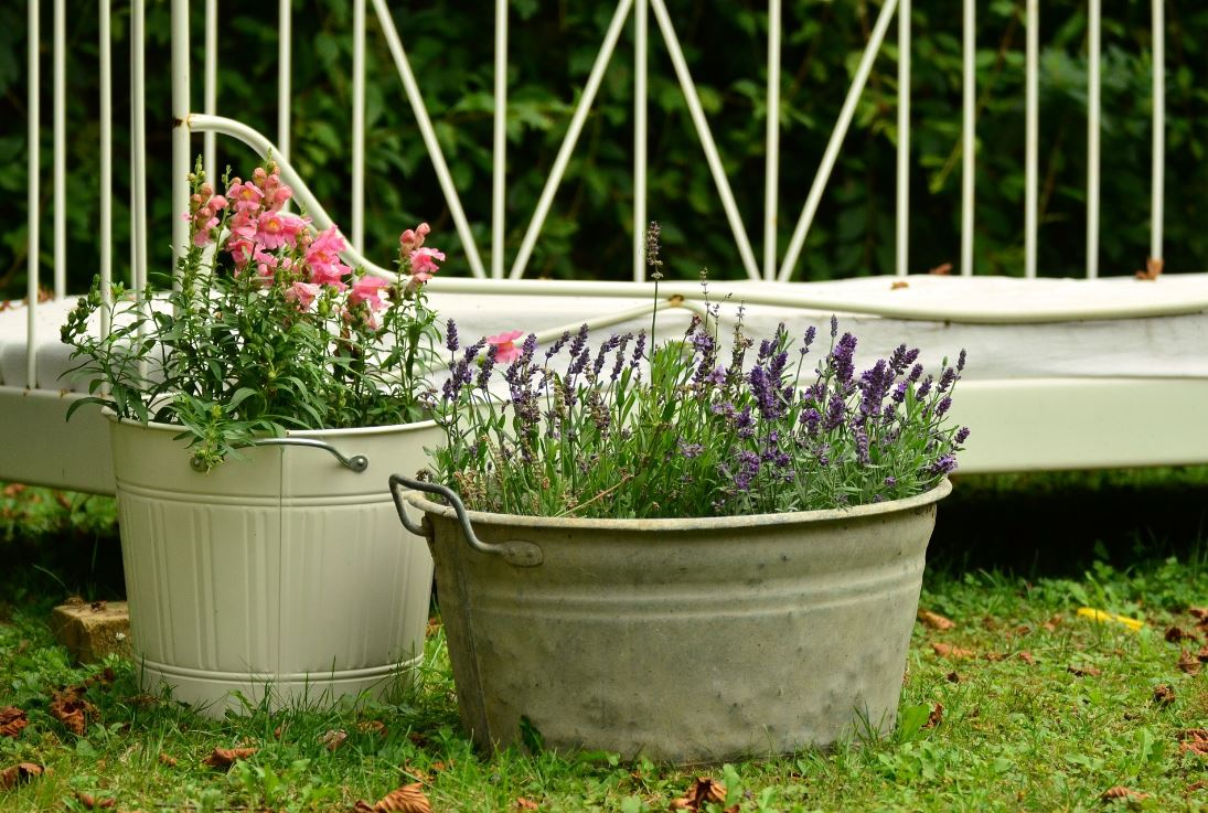 Even if you live in the city and don't have a large backyard space, you can still create a thriving garden, via container gardening. We've compiled everything you'll need to know to get started, and where to buy what you'll need. (File photo)