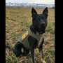 Bullet-proof vest donated to local sheriff's office K9