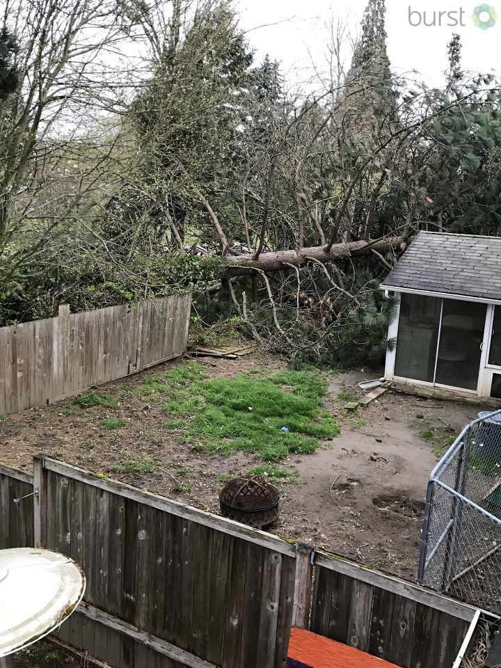 A tree topples over in Aloha. (Photo: Lori Larson via burst.com/katu)