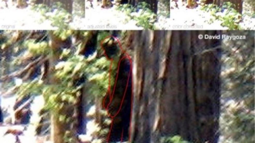 bigfoot sighting reported in california kmph