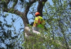 At the U.S. Capitol workers are taking down a tree that partially collapsed killing a grounds worker, Tuesday, April 18, 2017.jpg