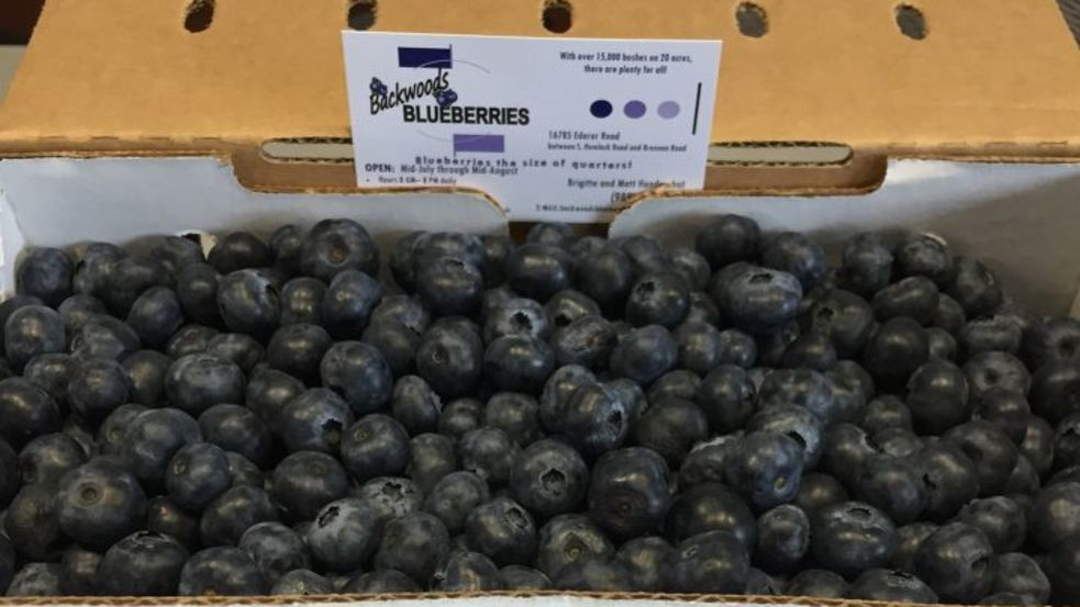 Blueberries by Jason Lorenz.jpg