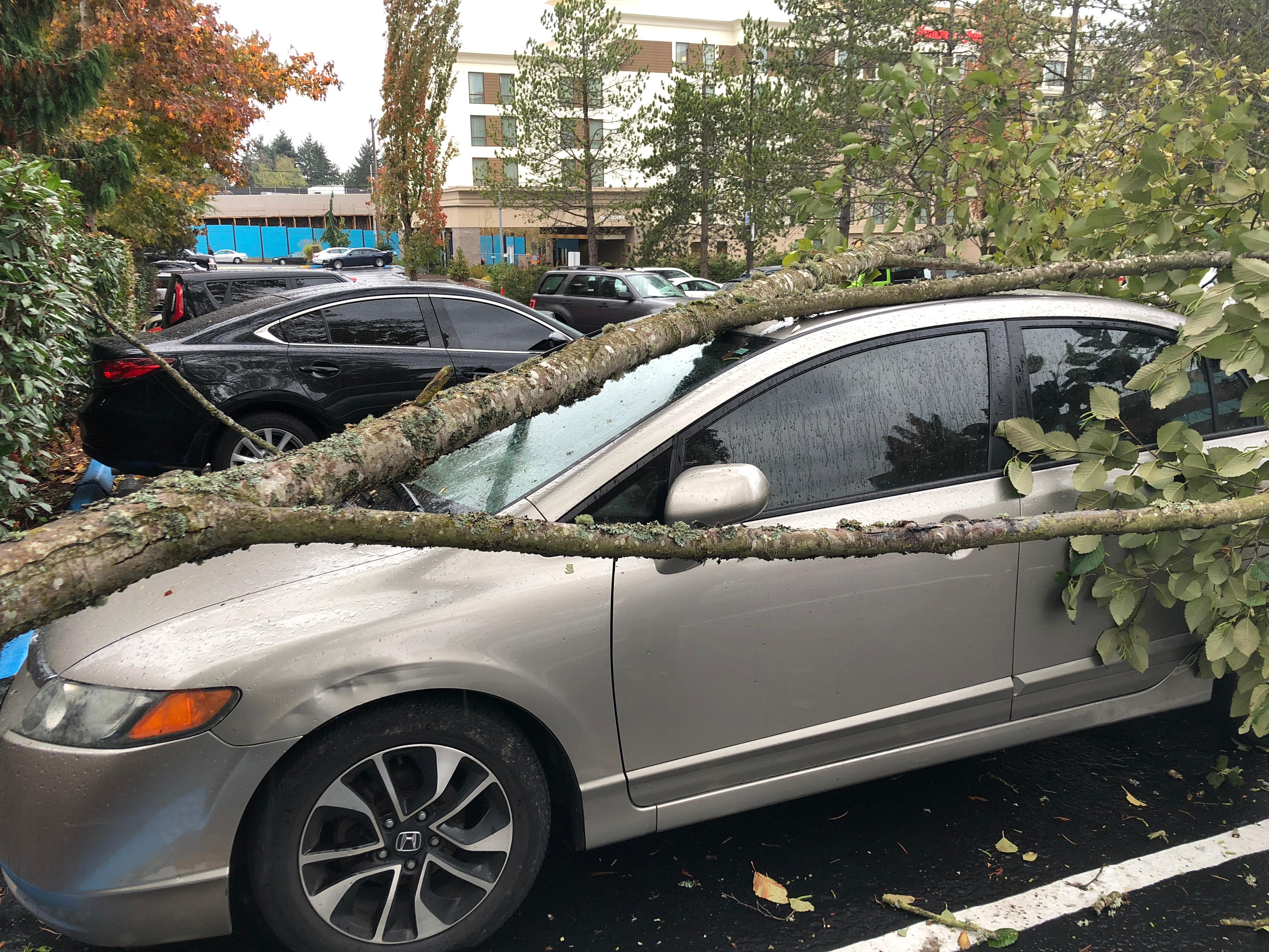 Tree crashes into car in North Seattle. (Photo: Jamela Mohammadi)<p></p>