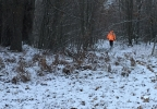 Deer hunter walks in snow at Navarino State Wildlife Area.jpg