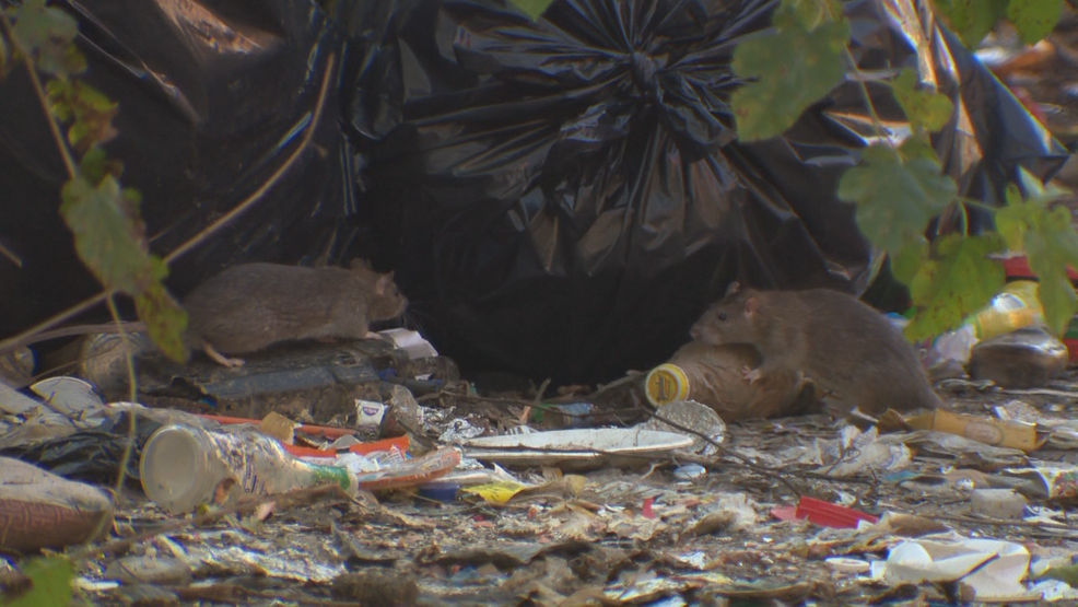 Rats invade South Baltimore neighborhood as illegal dump site piles up