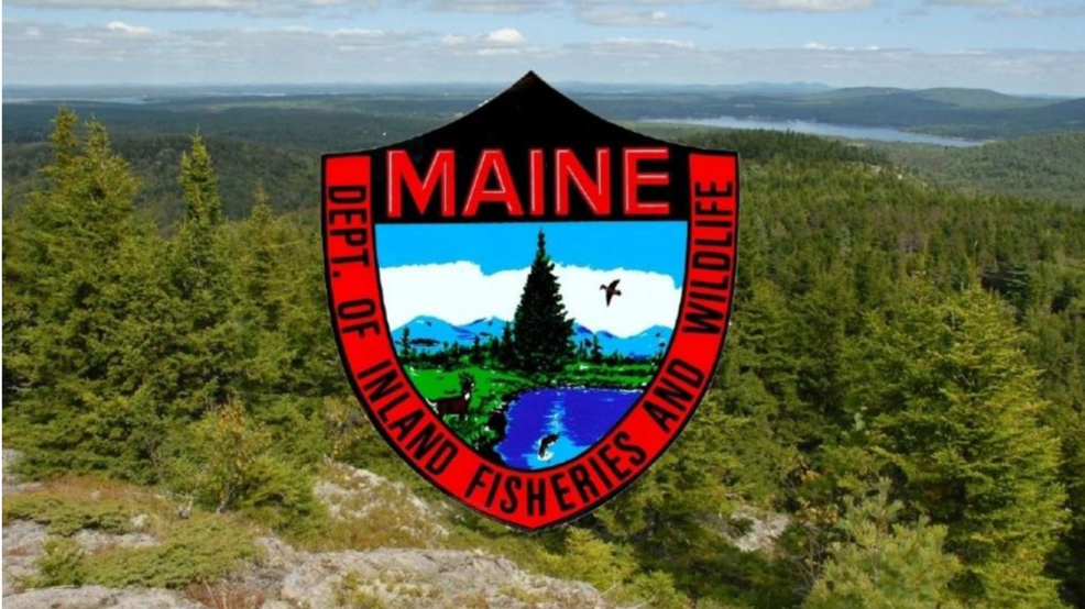 Searchers rescue elderly woman lost in Rumford woods