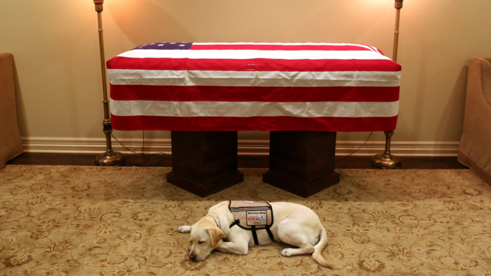 New Doj Advisory Service Animals And >> George H W Bush S Service Dog Rests Near His Casket In Moving Photo