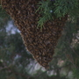 Swarming bees close Providence school playground