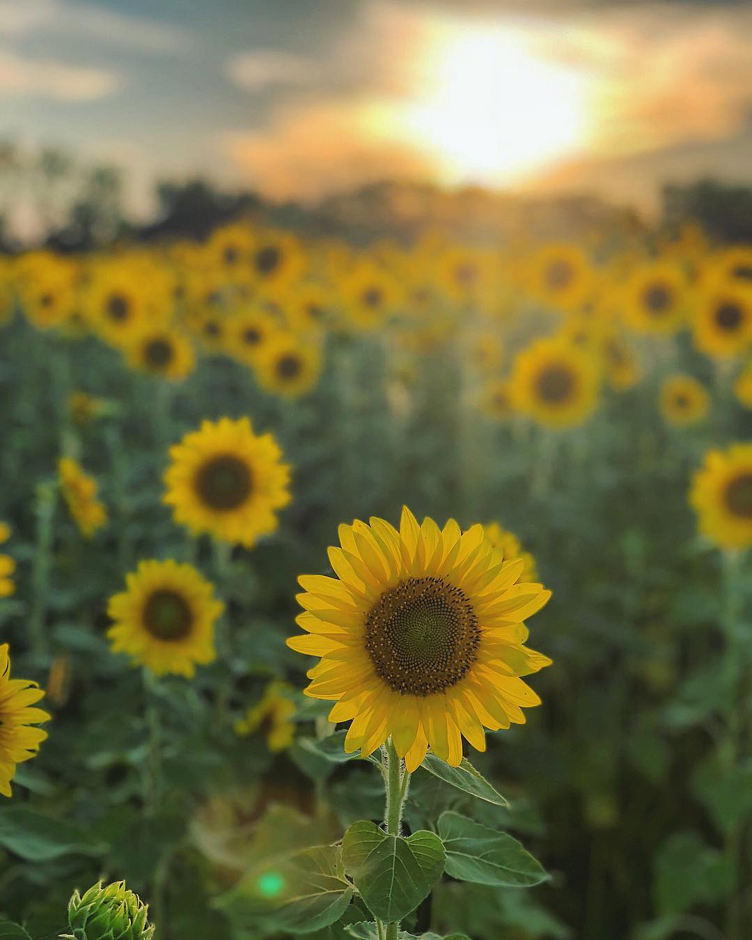 Every year, a large field of gorgeous, golden sunflowers blooms across from Cottell Park. During the summer months, the field is the perfect place to take photos for Instagram. If you want to visit the sunflowers yourself, they're located directly across Snider Road from Cottell Park. ADDRESS: 5847 Irwin Simpson Rd (45040) / Image courtesy of Instagram user @becs_photography3 // Published: 8.3.18