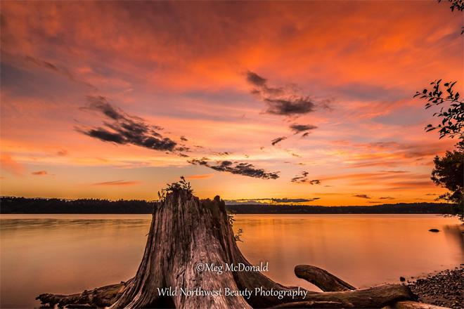 Vashon Island, looking through driftwood at Colvos Passage and Kitsap County. Photo credit: Wild Northwest Beauty Photography.
