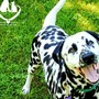 Deaf shelter dog looking for a forever home