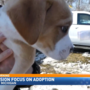 SPCA creates new mission to engage community, encourage more adoptions