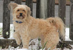 Bella enjoying snow in Ringgold, Ga - Angela Simpson.jpg