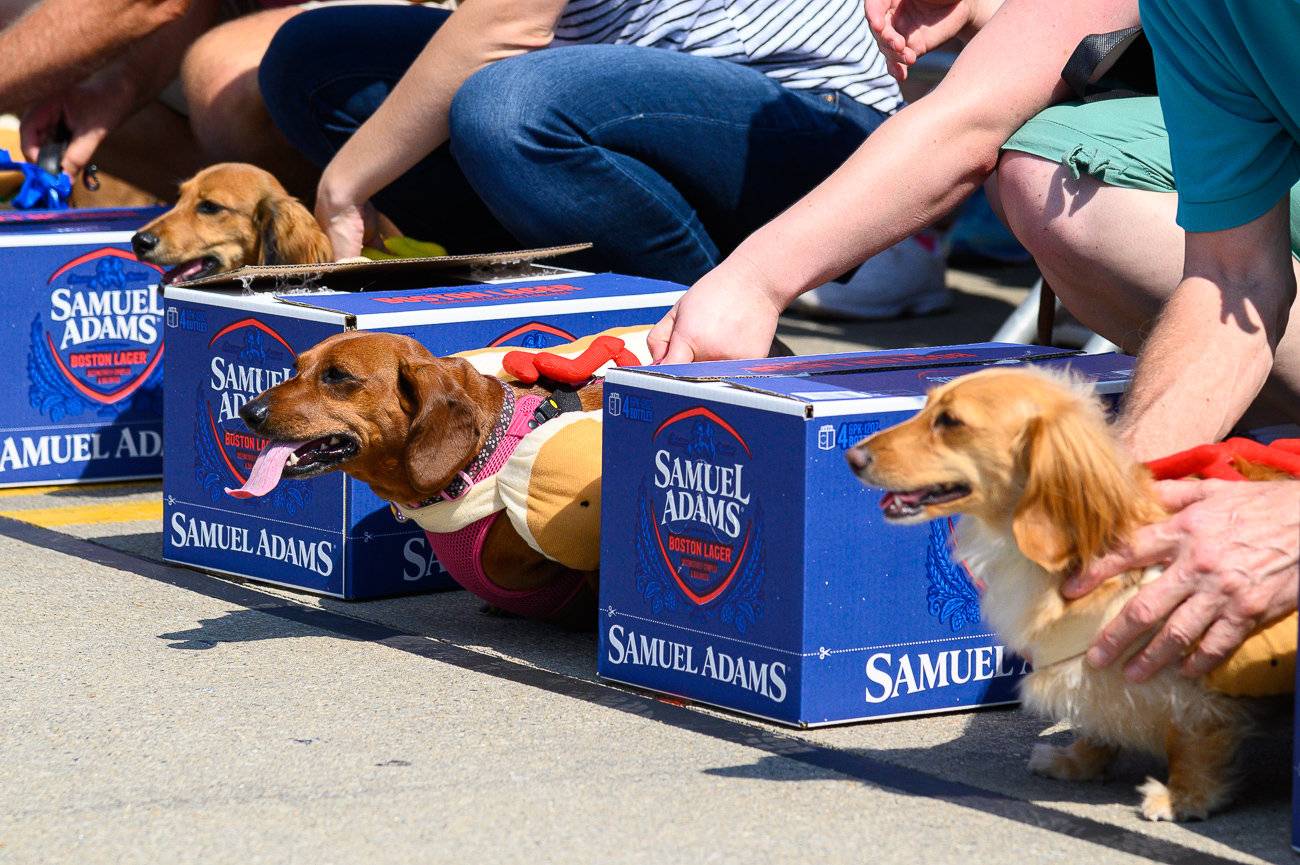 Race results for the 2019 Running of the Wieners are as follows: Heat #1 was won by Bucky (with owner Gary Sprague), Heat #2 was won by Maple (with owner Lorene Sander), Heat #3 was won by Jax (with owner Lauren Meherg), Heat #4 was won by Rudy (with owner Columbus Rankin), Heat #5 was won by Easter (with owner Kevin McManus), Heat #6 was won by Carter (with owner Andy Acosta), Heat #7 was won by Hemi (with owner Emily Ward), Heat #8 was won by Taz (with owner Tyler Dowty), and Heat #9 was won by Leo (with owner Quintin White). Every winner in each heat then competed in a final race. Maple won 1st place overall. / Image: Phil Armstrong, Cincinnati Refined // Published: 9.19.19