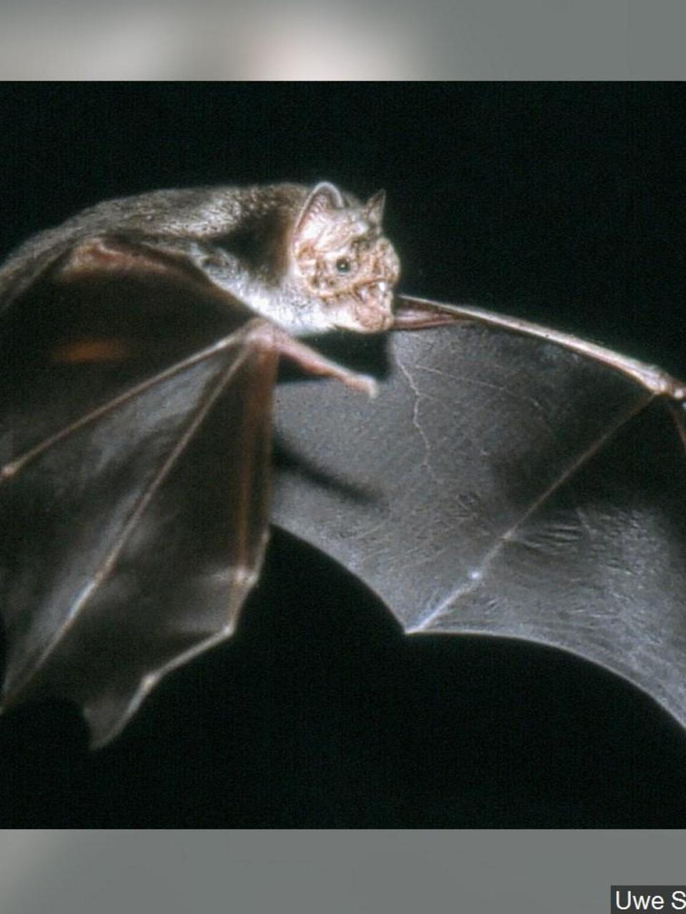 New Coronavirus Likely Originated In Bats Chinese